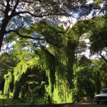 Park in Havanna